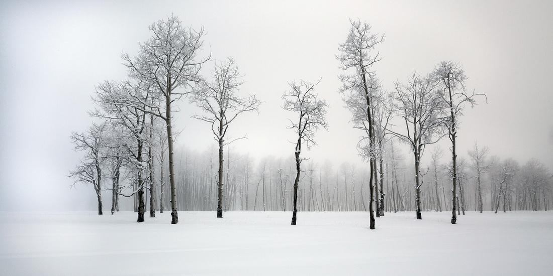 MP0107 - Winter Grove